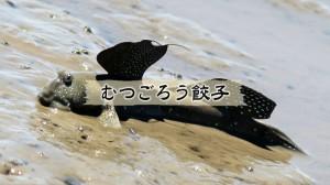 03_ムツゴロウ餃子①